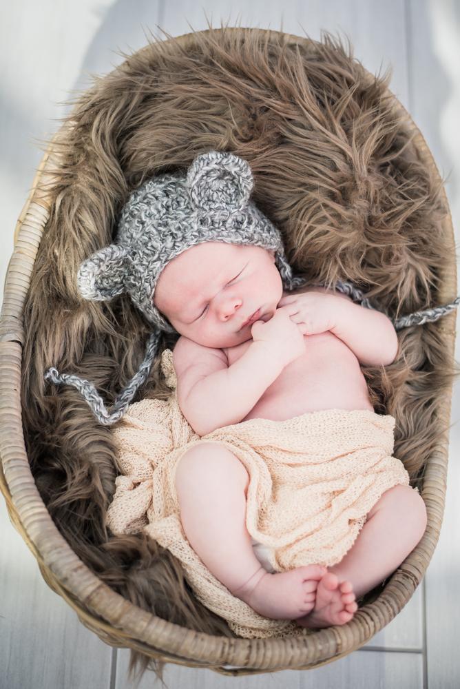 In the basket, newborn portraits Carlisle