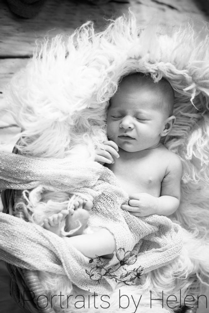 Issy snuggled in basket, Cumbria photographers