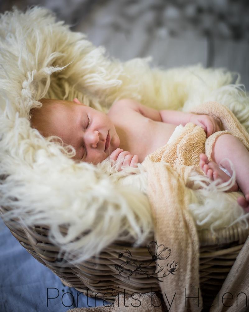Snuggled Issy in basket, newborn portraits Wigton