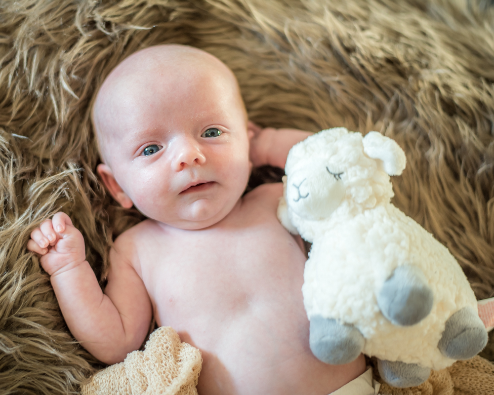 Freddie and his cuddly sheep, newborn portraits Sheffield