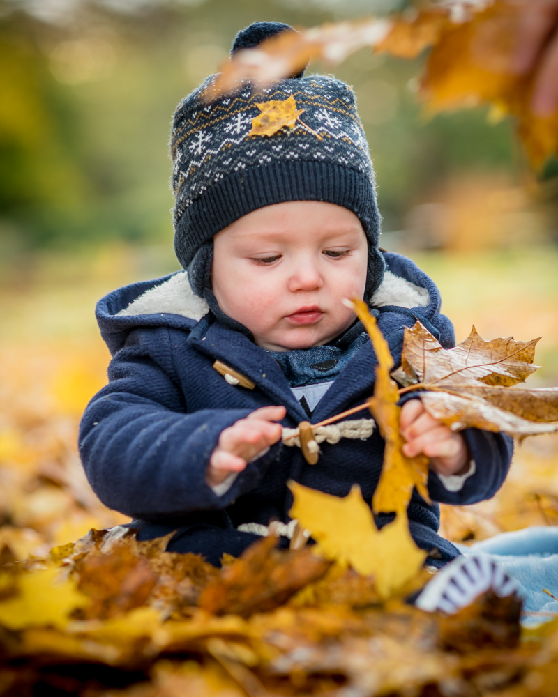 Hugo playing with leaves, Autumn portraits Cumbria