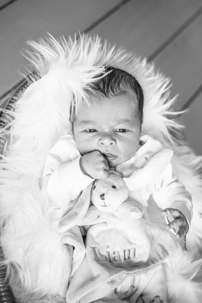 Baby in basket, newborn portraits Cockermouth
