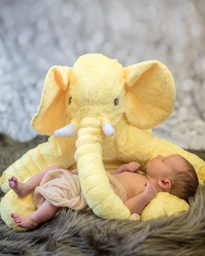 Baby Brooke in elephant teddy, newborn portraits Carlisle